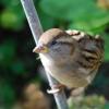 T.Rex Sparrow